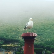 The Seagull magestic